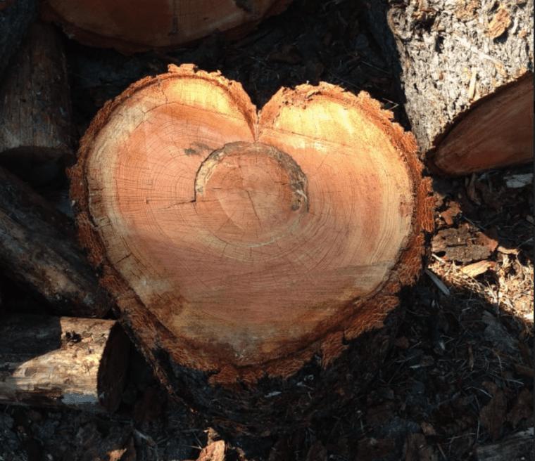 tree trunk in shape of heart