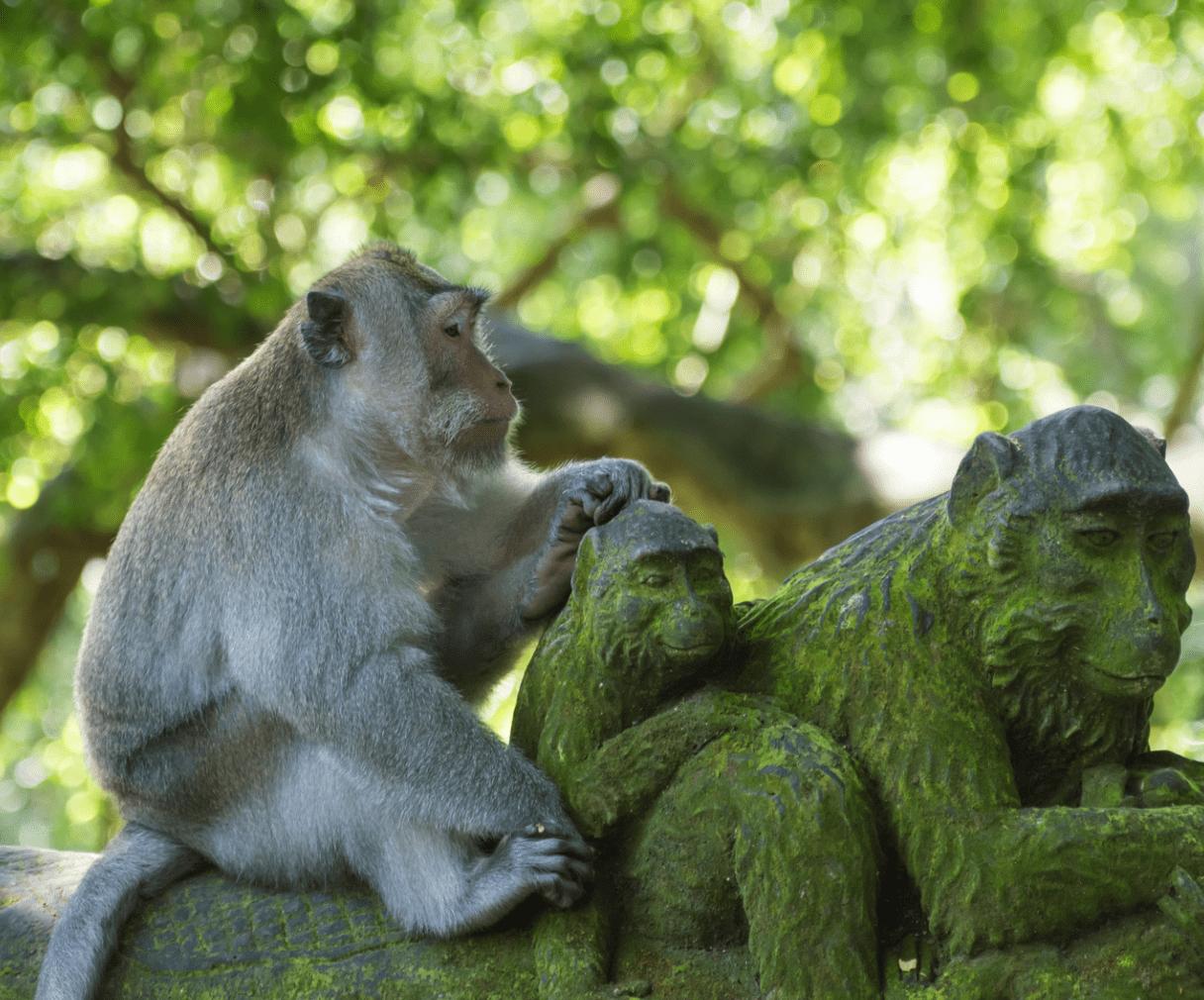 Monkeys on wall